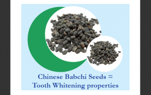Babchi Plant - use in Oil Pulling