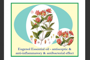 Eugenol Essential Oil and Oil Pulling